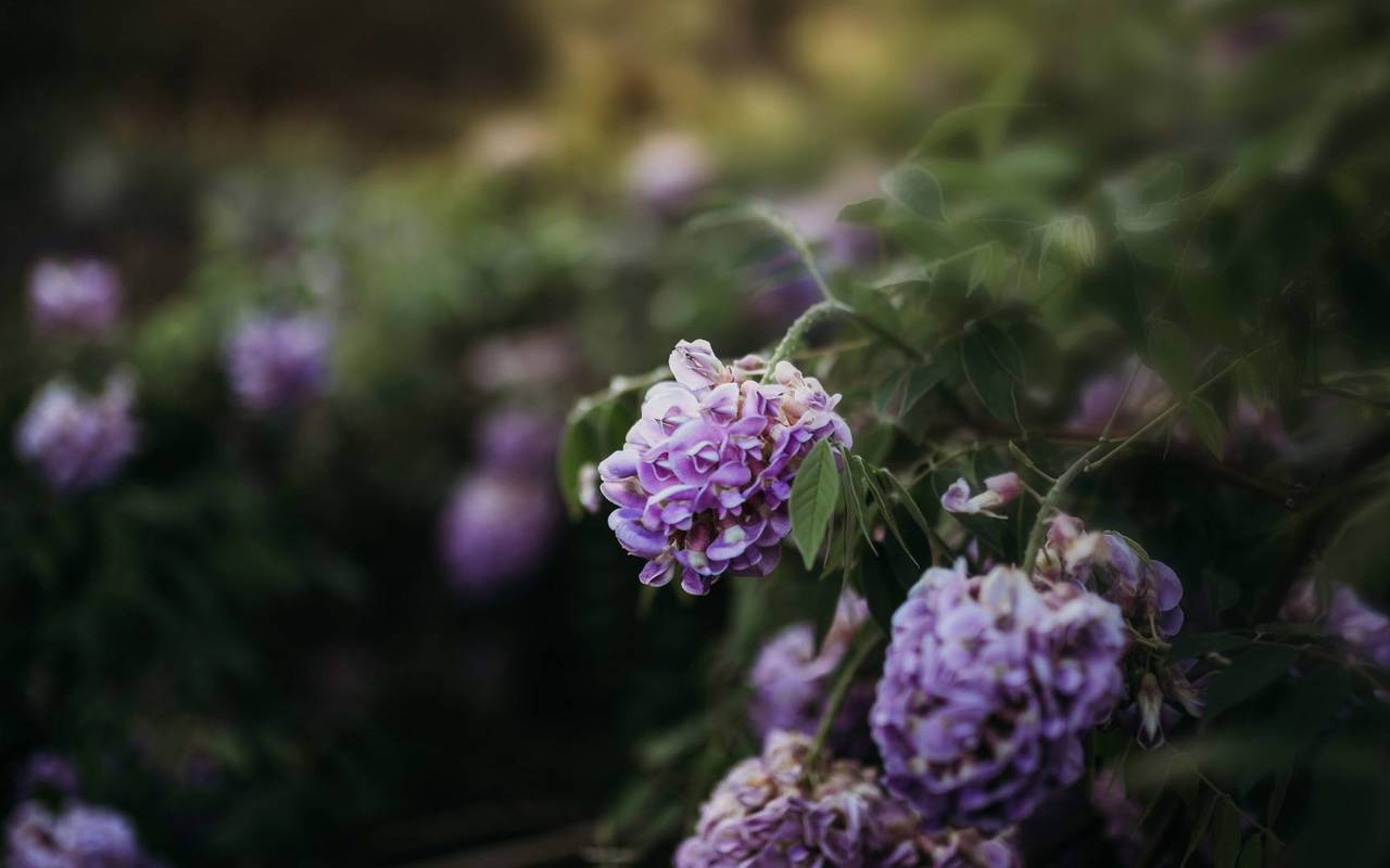 flowers hotel sarlat la caneda