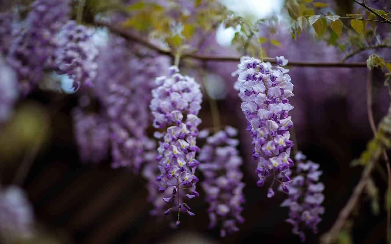 fleurs glycines hotel luxe perigord